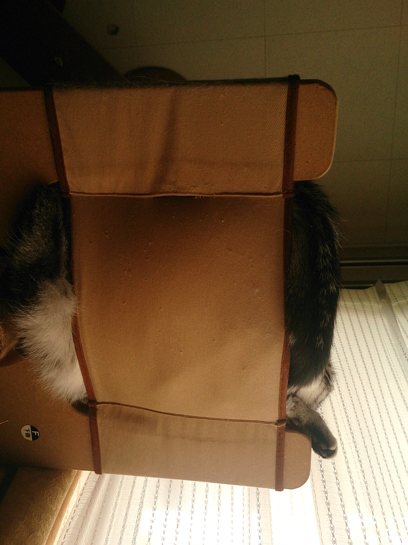 Cat_20141012-02.jpg