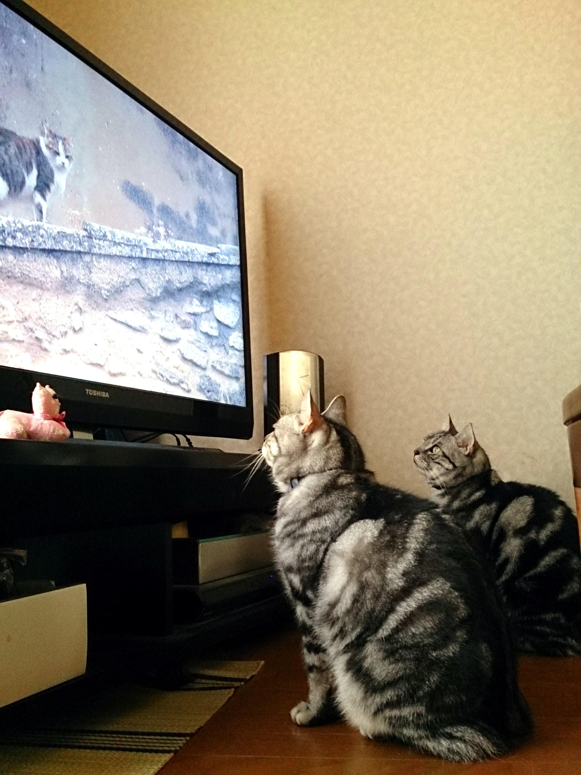 Cat_20141012-03.jpg