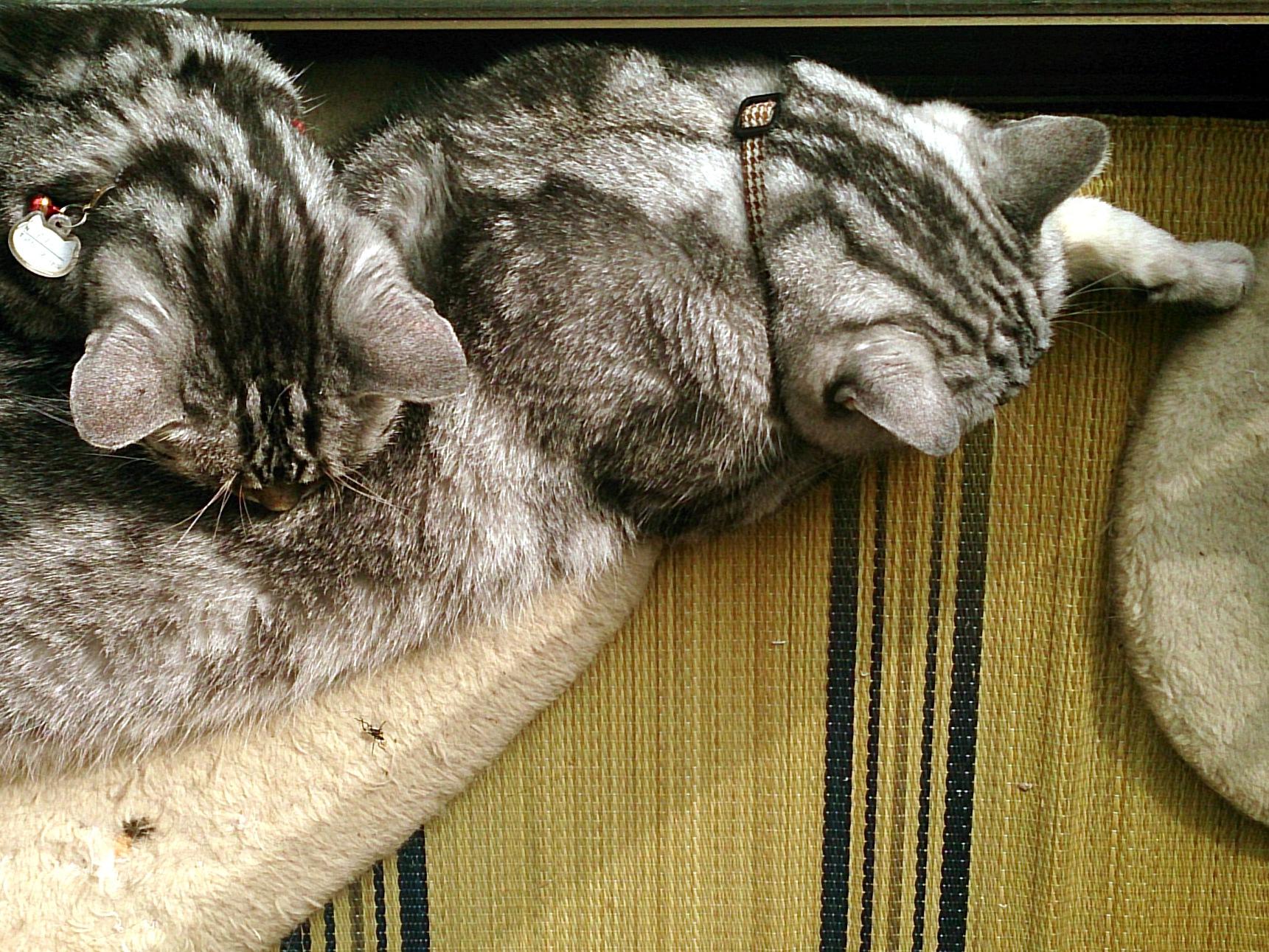 Cat_20141012-04.jpg