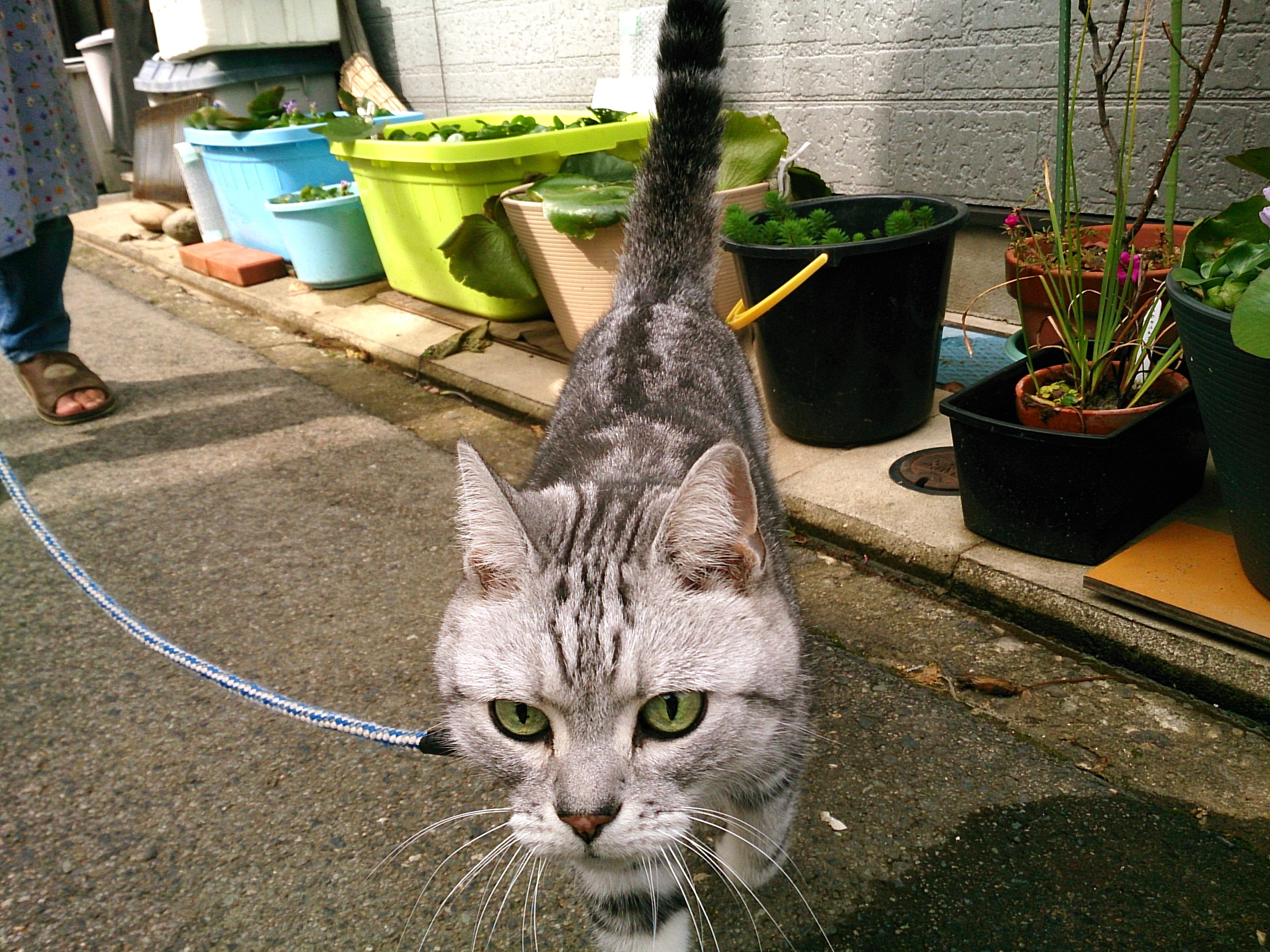 Cat_20141012-05.jpg