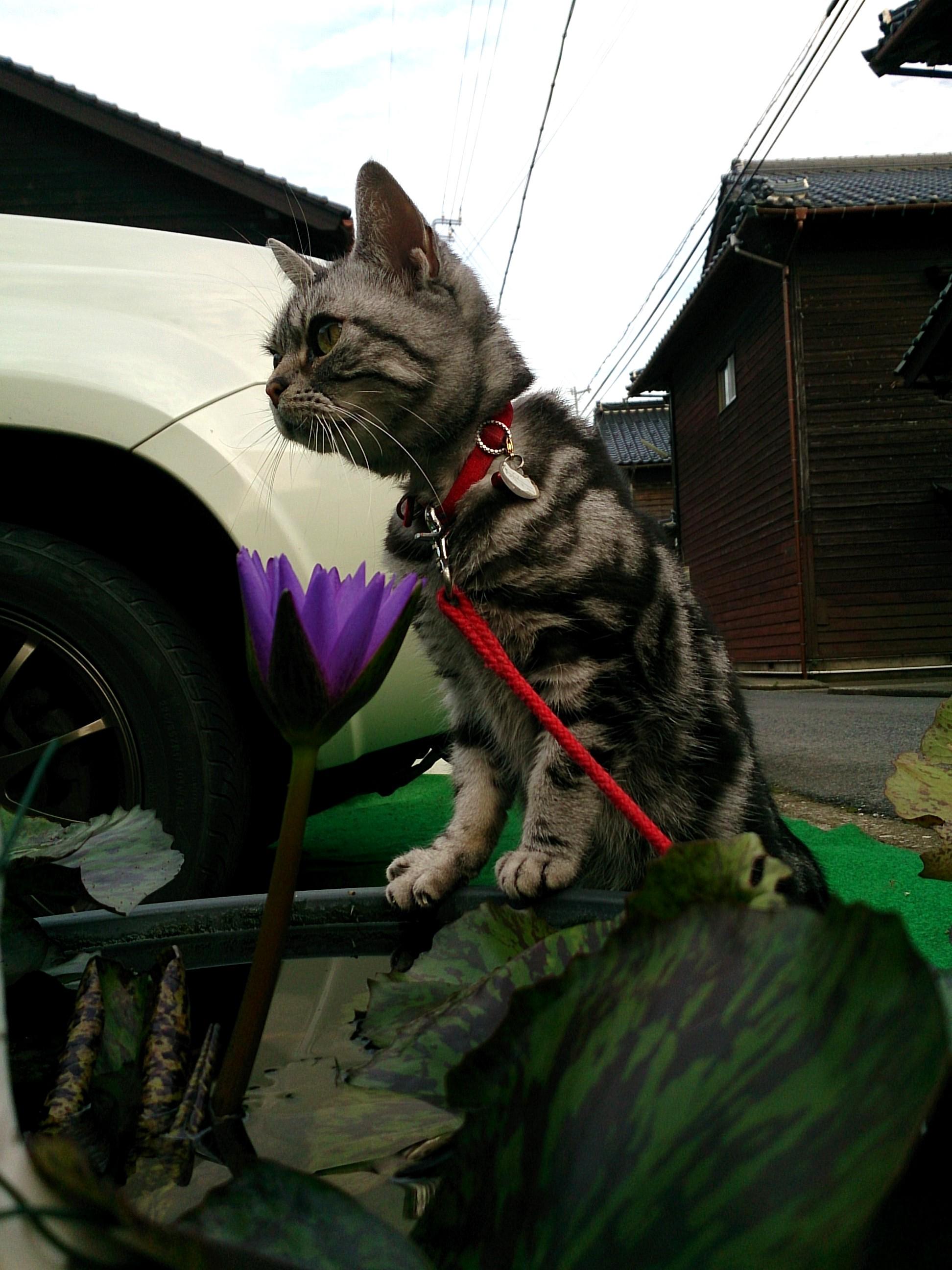 Cat_20141012-07.jpg