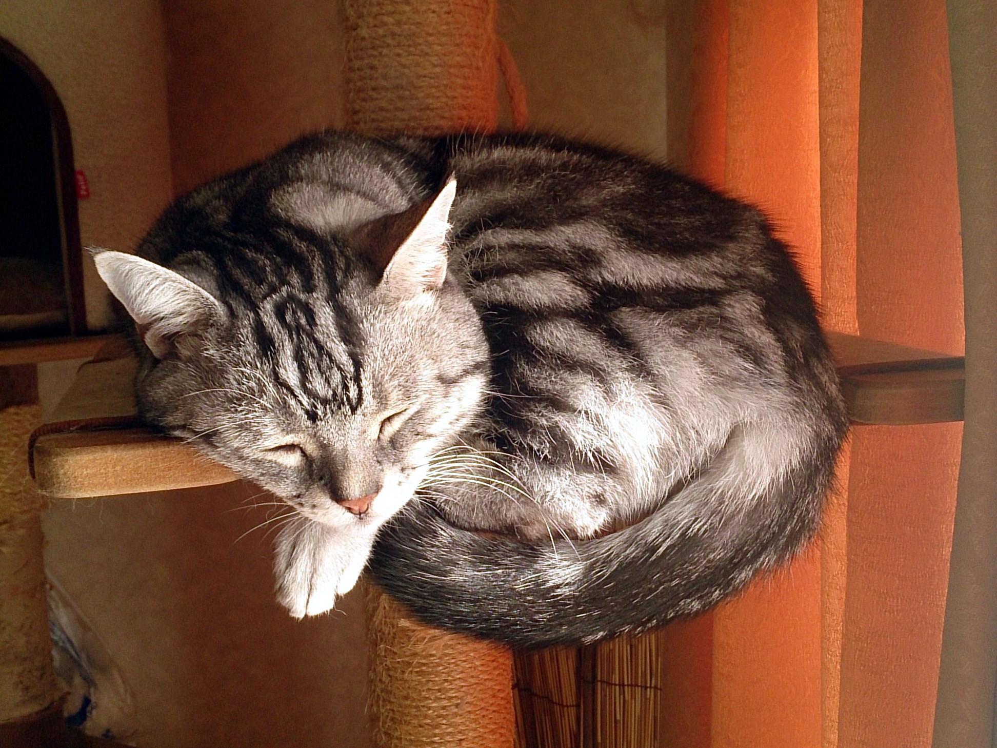 Cat_20141015.jpg