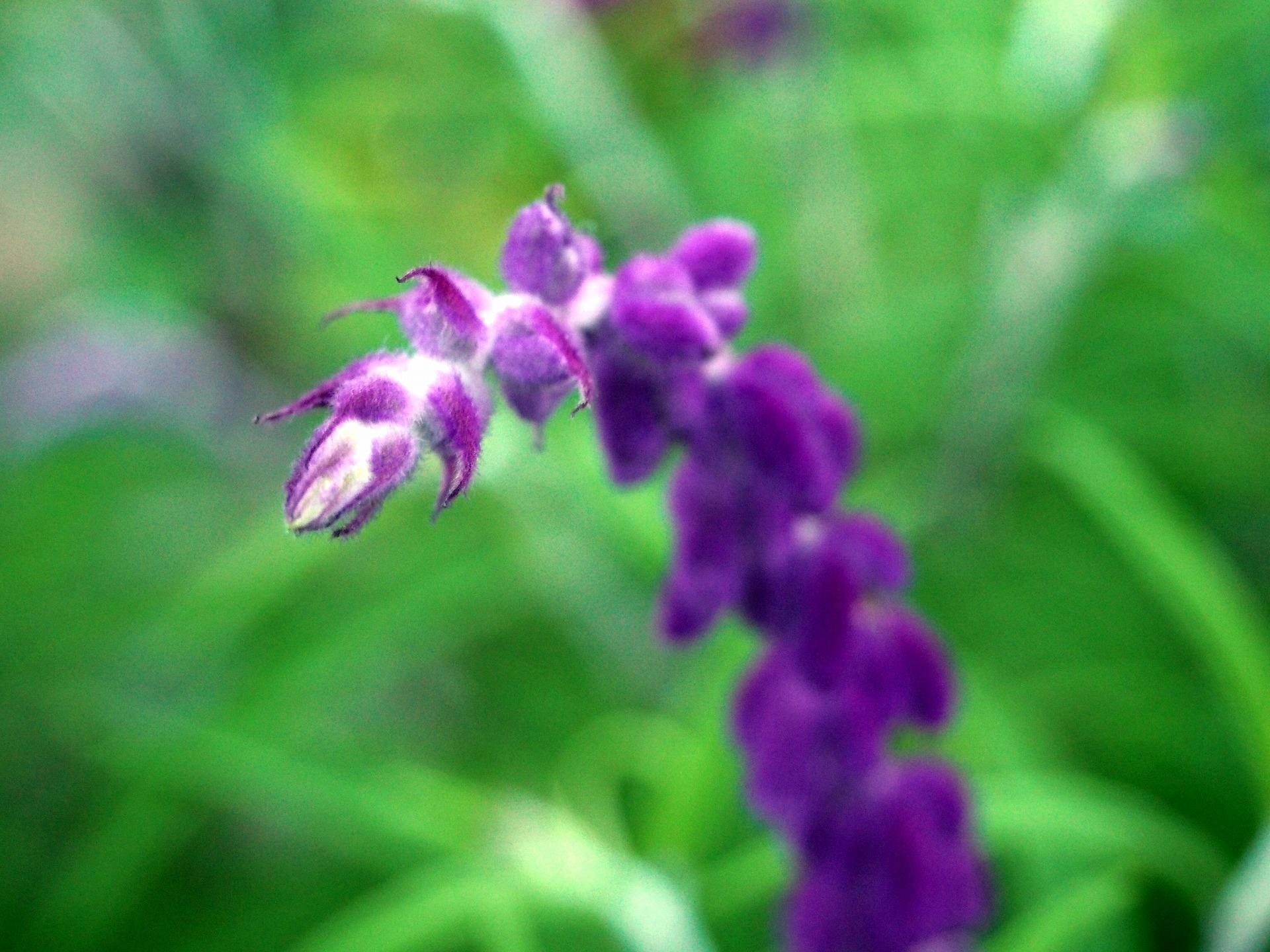 MACRO_Flower02_20140921.jpg