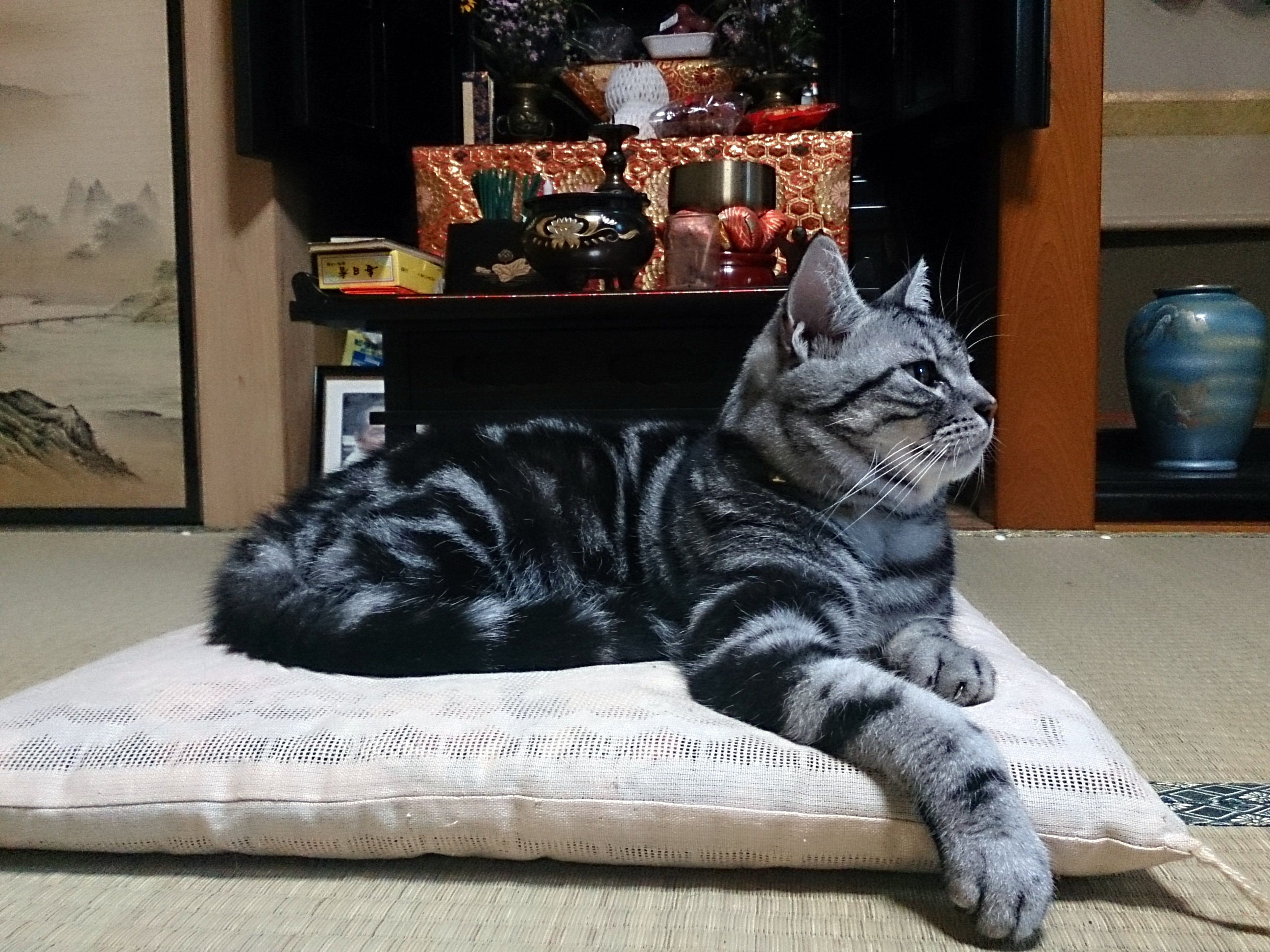 Totoro_20140922.jpg