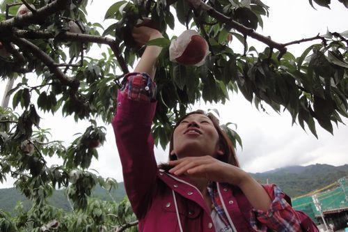 yamanashi momogari Peach