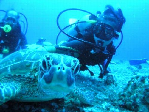 沖縄首里城玉陵周辺おすすめ卒業旅行社員旅行ダイビングプラン