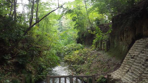上水小橋から見た玉川上水