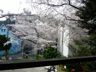 ハラハラと散る桜