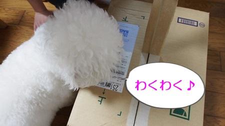 P4250019.jpg