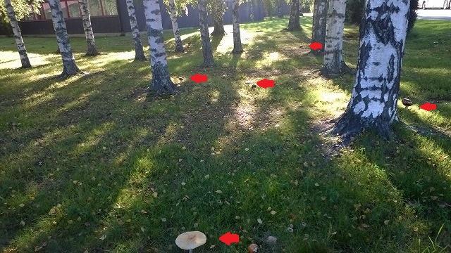 キノコの公園1