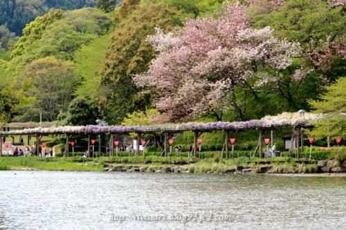 蓮花寺池公園
