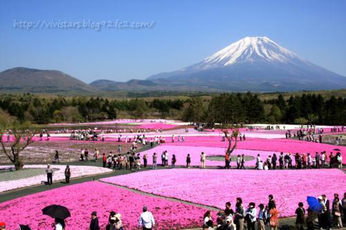 富士山と芝桜02