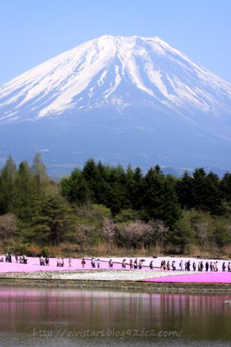 富士山と芝桜01