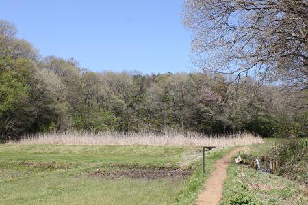 谷戸と雑木林