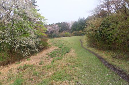 桜咲く尾根道