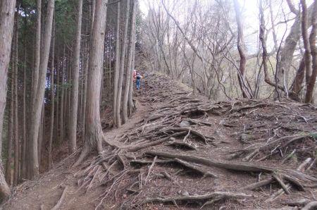 木の根は続く