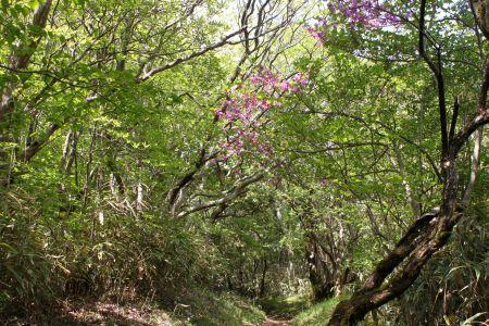 緑の登山道
