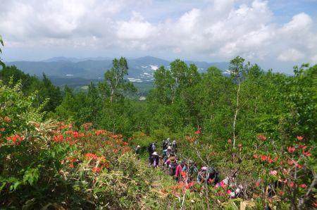シラカバ林を登る