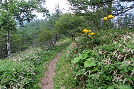 奥甘利山への道