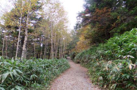 針葉樹林の道