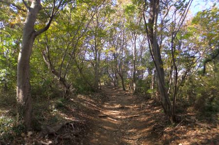 雑木林の道