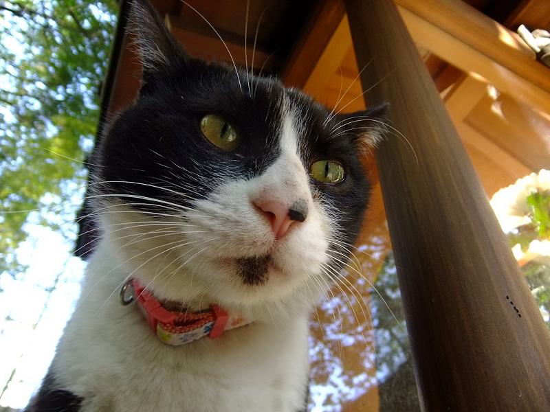 黒白猫をローアングルで
