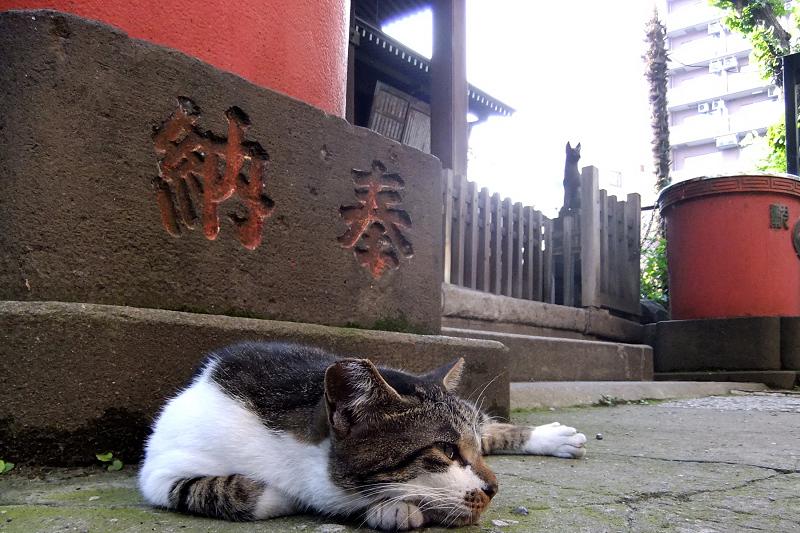 拝殿前のネコ