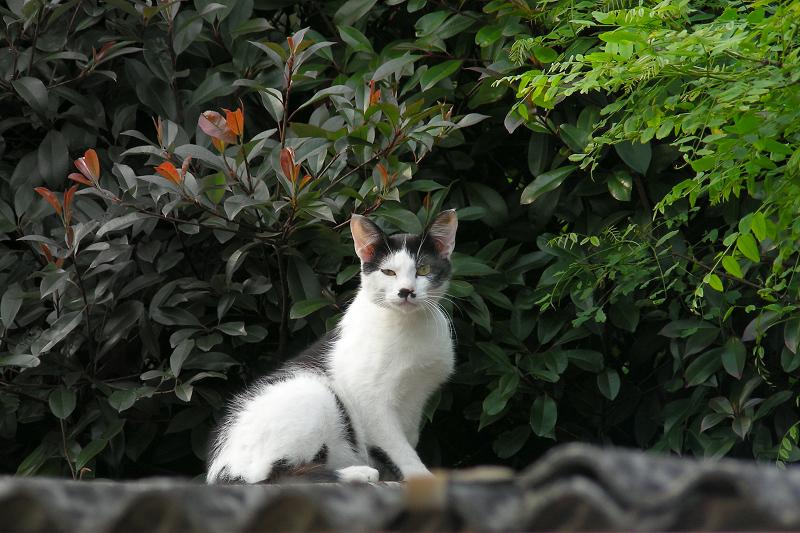 緑の葉っぱとネコ