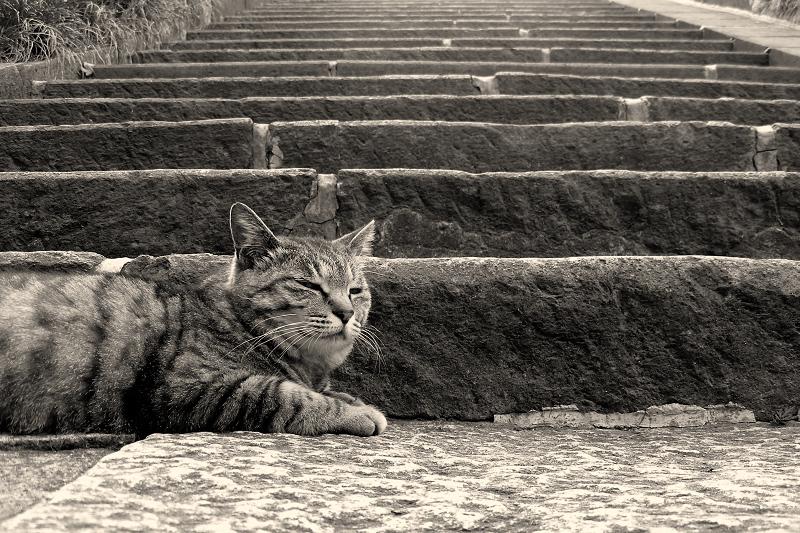 階段の下のネコ