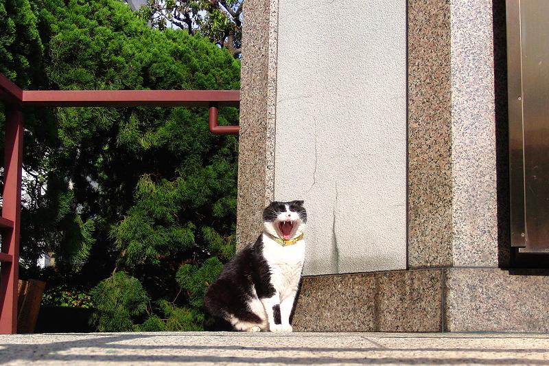 お堂の前の欠伸ネコ