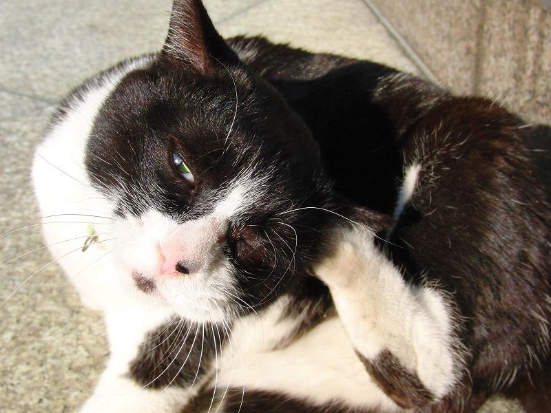 虚ろな瞳のネコ
