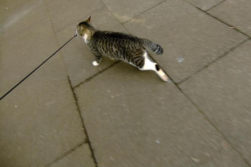 ネズミを咥えて逃げそうなネコ