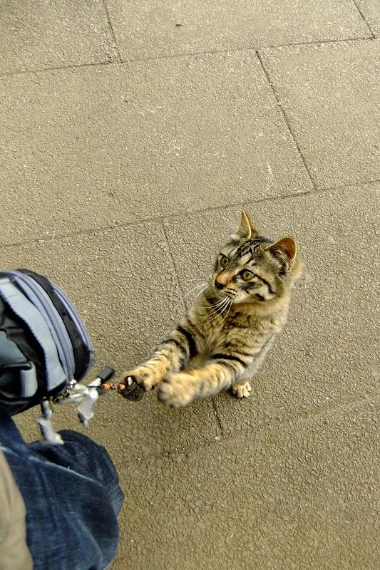 ポーチを引っ張るネコ