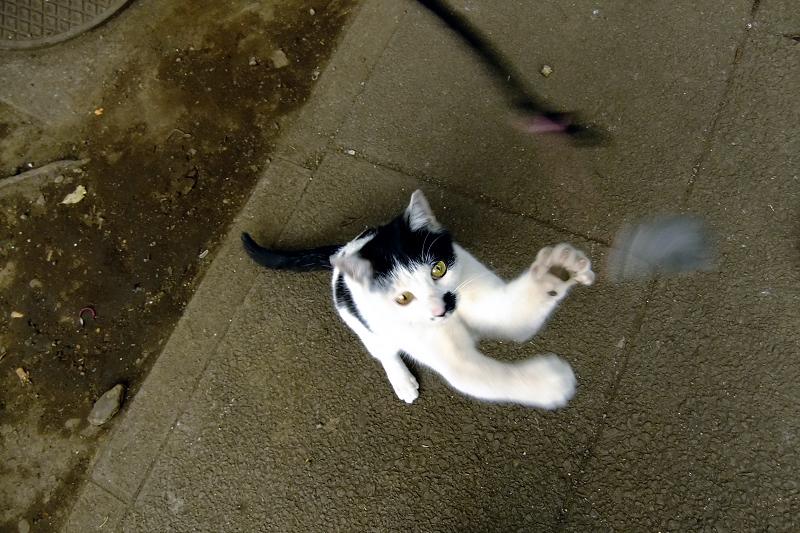立ち上がってネズミを見てるネコ
