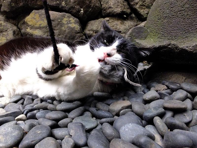 ネズミのおもちゃを噛んでるネコ