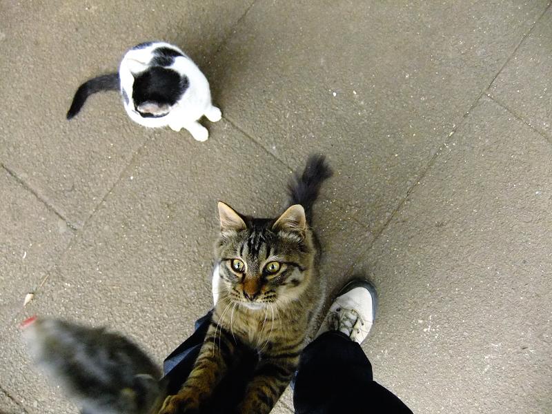 私の足に登りそうなネコ