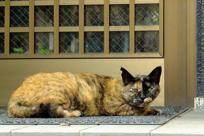 玄関マットのネコ