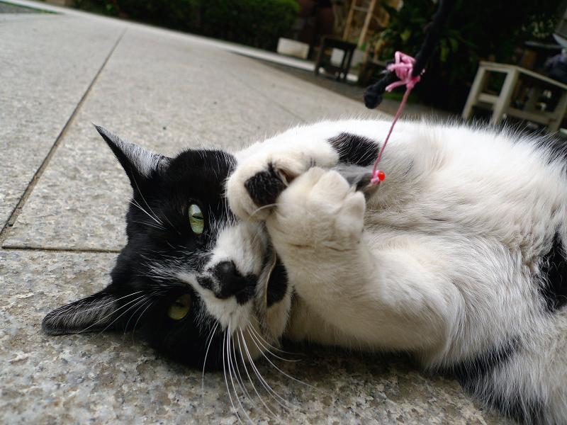 ネズミの尻尾を噛んでるネコ