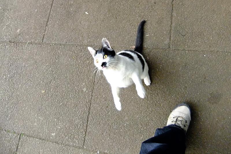 立ち上がる真剣顔のネコ