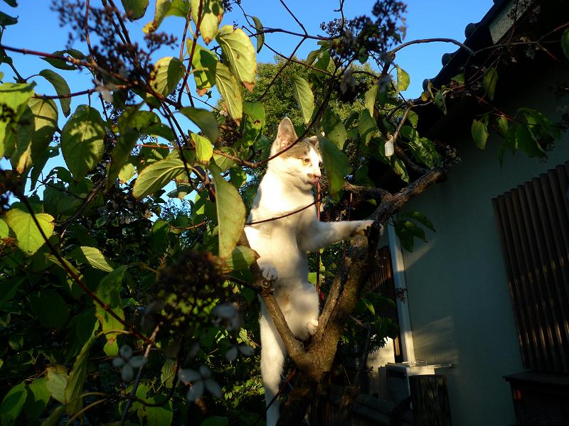 木に登ってベロ出して立ち上がってるネコ