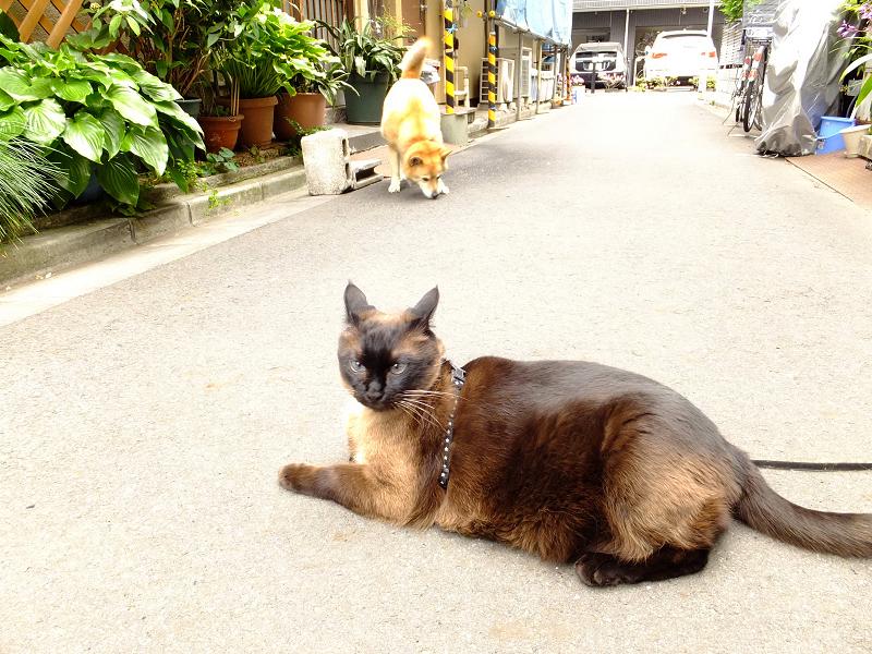 路地のネコ