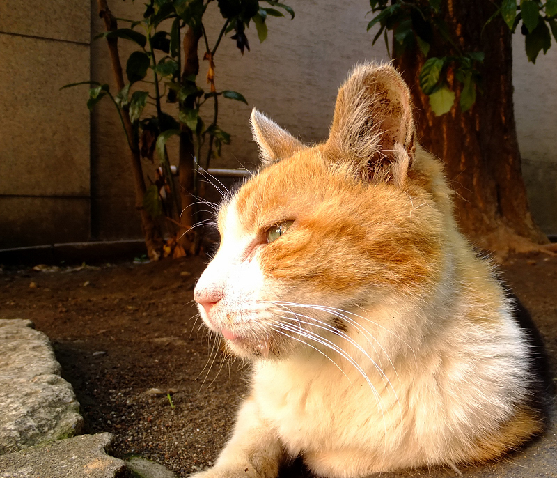 日差し差す方を見てるネコ