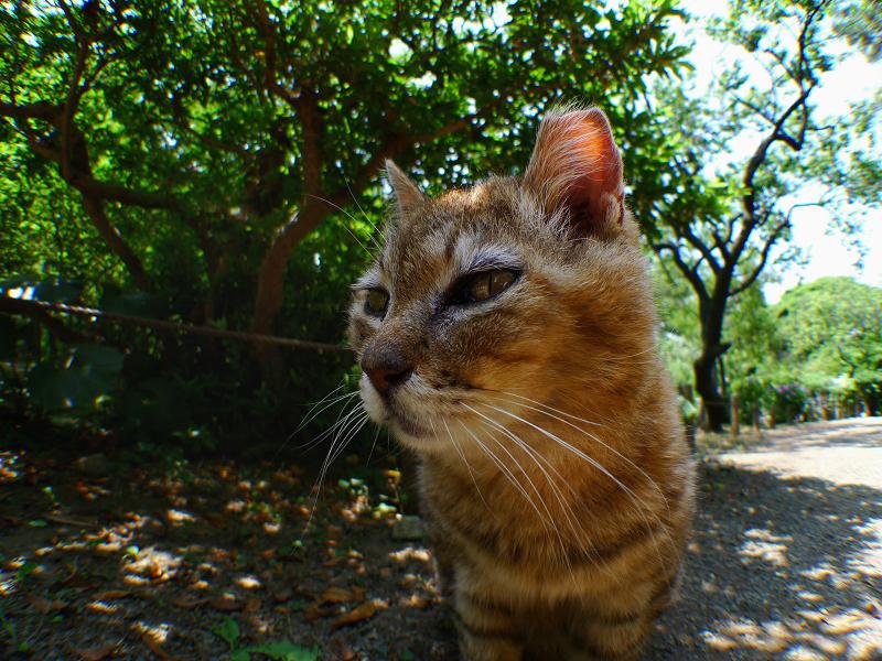 庭園のネコ