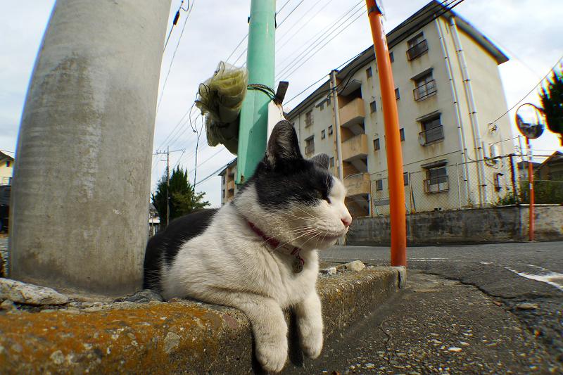 縁石に乗ってるネコ