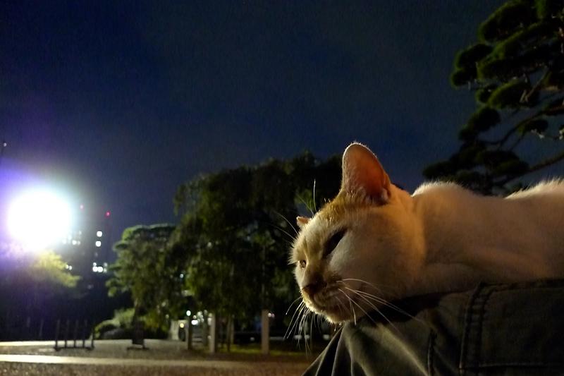 夜になっても膝に乗ってるネコ