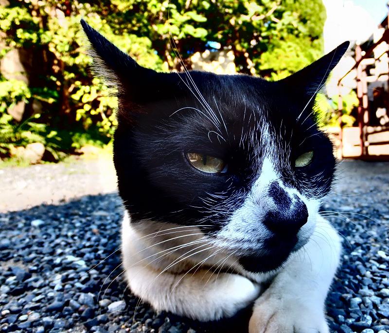 日影で休憩中のネコ