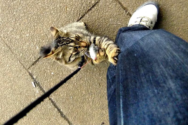 私のジーンズに爪を立ててるネコ