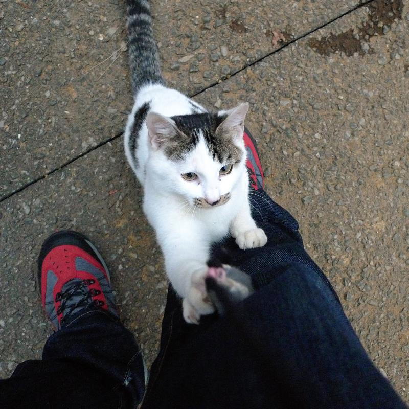 私の腿に爪を立ててるネコ