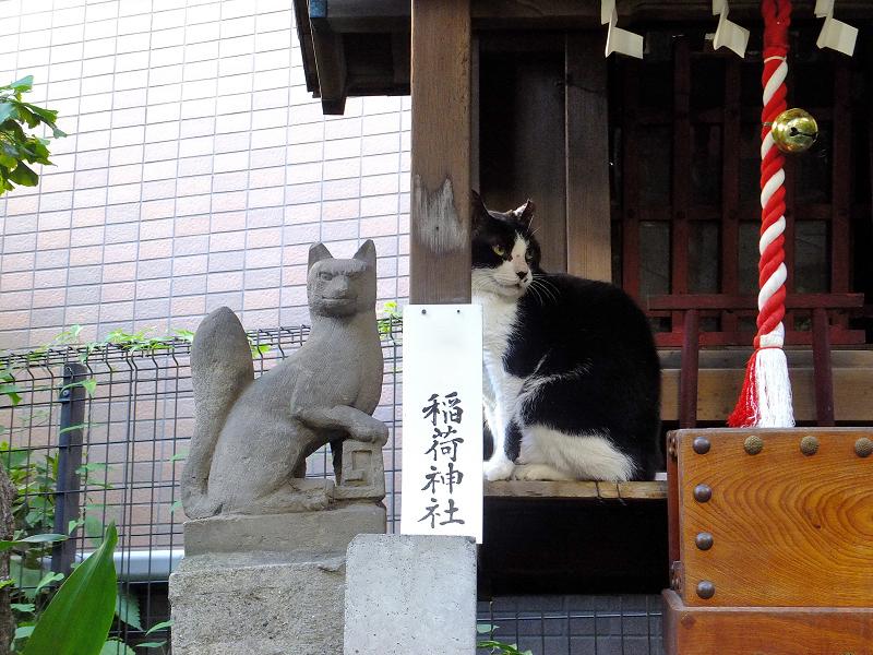 稲荷神社のネコ