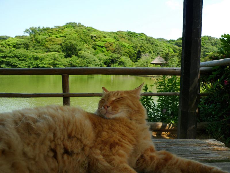 池苑のネコ